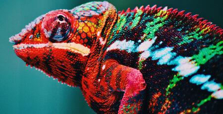 Corundum's Chameleons— Color-change Sapphires